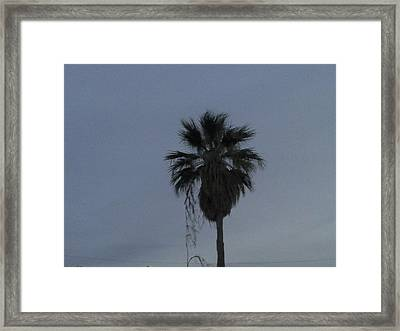 Beautiful Palm Tree Framed Print by Rebekah Luper