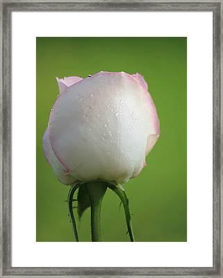 Beautiful Promise Framed Print by  The Art Of Marilyn Ridoutt-Greene