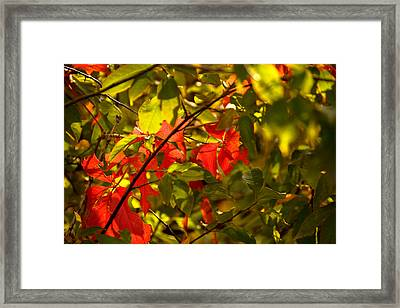Beautiful Red Framed Print by Gloria Pasko