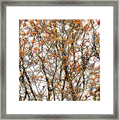 Beautiful Rowan 10 - Square Framed Print by Alexander Senin