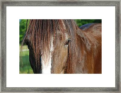 Beautiful Shire Framed Print by Jennifer Ancker