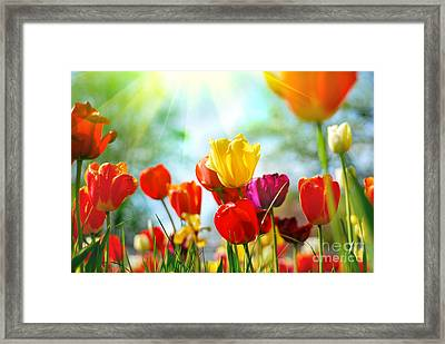 Beautiful Spring Tulips Framed Print by Boon Mee