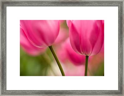 Beautiful Stems Framed Print by Mike Reid
