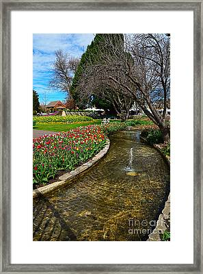 Beautiful Tulip Gardens Framed Print by Kaye Menner