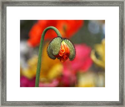 Beautiful Ugly Framed Print by Rona Black