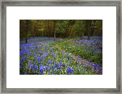 Beautiful Walk Through Framed Print by Svetlana Sewell