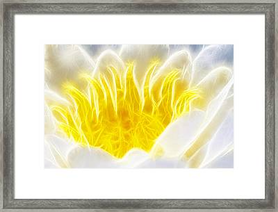 Beautiful White And Yellow Flower - Digital Artwork Framed Print by Matthias Hauser