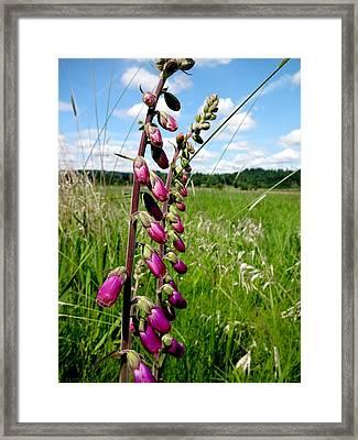 Beautiful Wildflowers Framed Print by Lizbeth Bostrom