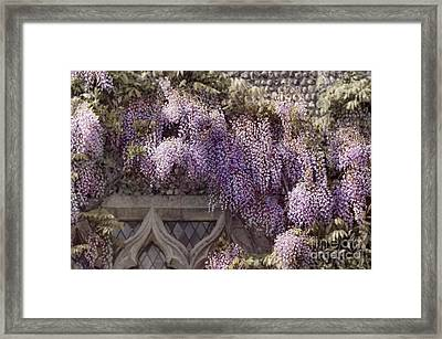 Beautiful Wisteria Framed Print by Svetlana Sewell