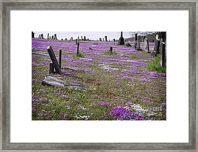Beautifully Resting In Peace Framed Print by John Stephens