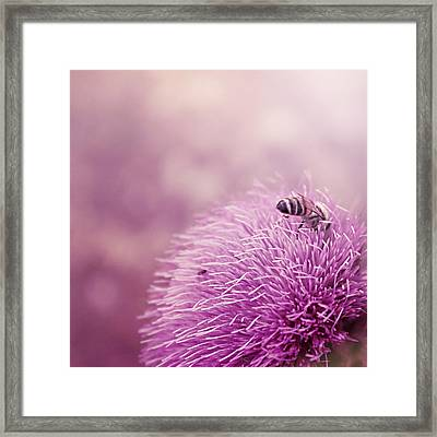 Beauty And The Bee Framed Print by Trish Mistric