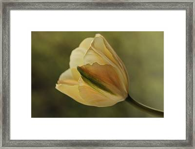 Beauty Framed Print by Connie Handscomb