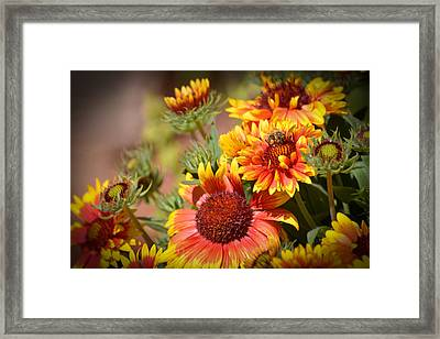 Beauty In The Garden Framed Print by Lynn Bauer