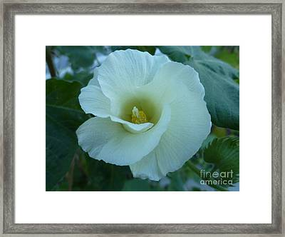 Beauty In White Laced Satin Dress Framed Print by Lingfai Leung