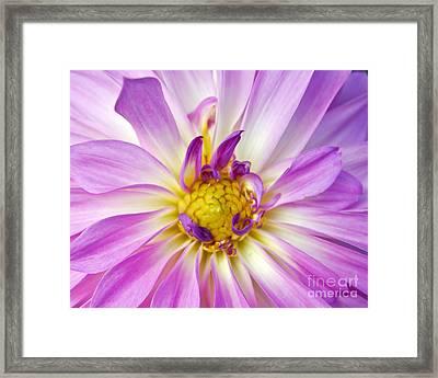 Beauty Framed Print by Leslie Cruz