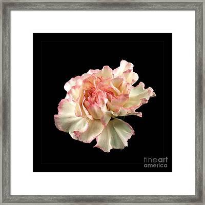 Beauty Framed Print by Liz  Alderdice