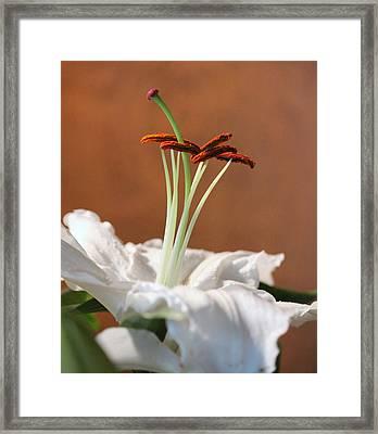 Beauty Of A Lily Framed Print by Rosanne Jordan