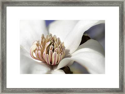 Beauty Of A Merrill Magnolia Framed Print by Julie Palencia