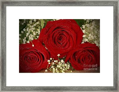 Beauty Of Roses Framed Print by Inspired Nature Photography Fine Art Photography