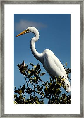 Beauty Of Sanibel Framed Print by Karen Wiles