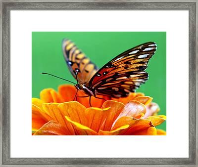 Beauty Of Shannon Framed Print by Karen Wiles