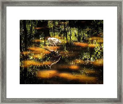 Beauty Of The Bog Framed Print by Karen Wiles