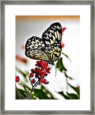 Beauty Wing Framed Print by Marty Koch