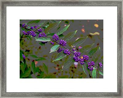 Beautyberry Framed Print by Frank Tozier