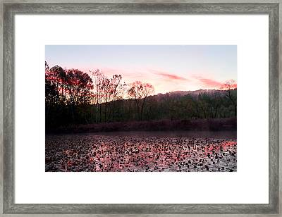 Beaver Marsh Framed Print by David Yunker