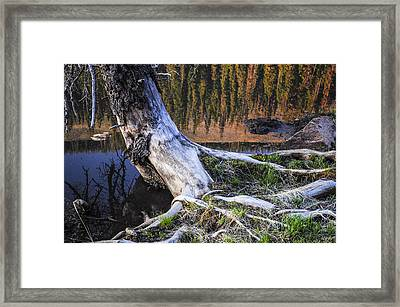 Beaver Pond Reflection 2 Framed Print by Aaron Spong