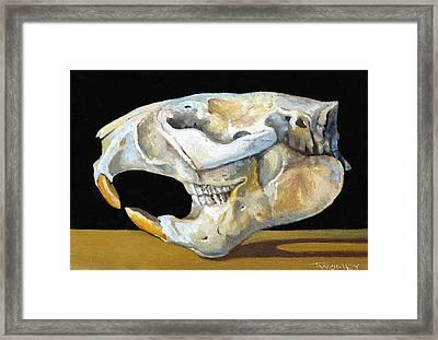 Beaver Skull 1 Framed Print by Catherine Twomey