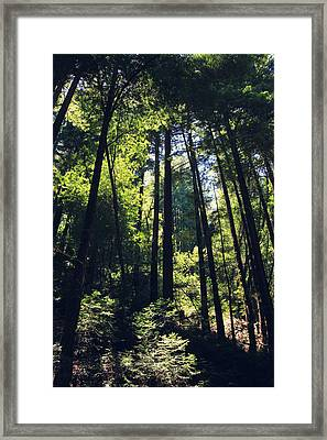 Because You Loved Me Framed Print by Laurie Search