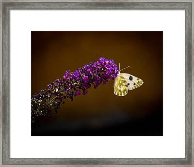 Beckers On Butterfly Bush Sparks Nevada Framed Print by Janis Knight