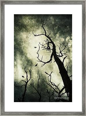 Beckoning Framed Print by Andrew Paranavitana