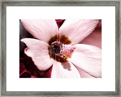 Bee At Work Framed Print by John Rizzuto