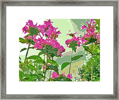 Bee Balm Framed Print by Jean Hall