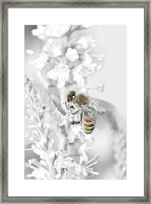 Bee Collecting Pollen Framed Print by Toppart Sweden