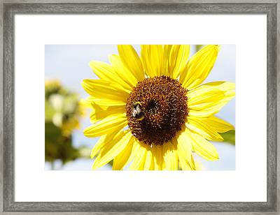 Bee On Flower Framed Print by Les Cunliffe