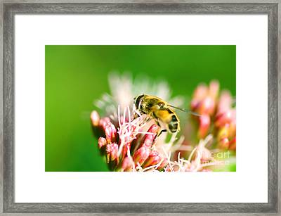 Bee On Flower Framed Print by Michal Bednarek