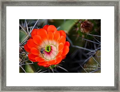 Bee Ware The Thorns Framed Print by Deb Halloran