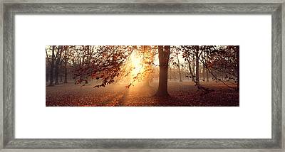 Beech Trees Uppland Sweden Framed Print by Panoramic Images