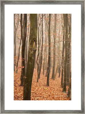 Beech Wood In Autumn Framed Print by Anne Gilbert