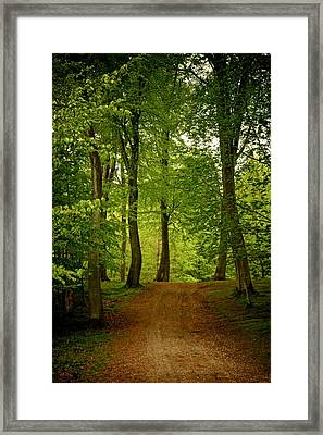 Beeches Framed Print by Odd Jeppesen