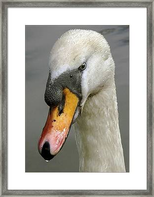 Been For A Dip Framed Print by Adrian Campfield