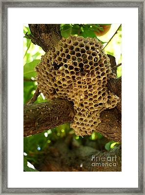 Bees In The Peach Tree Framed Print by Kerri Mortenson