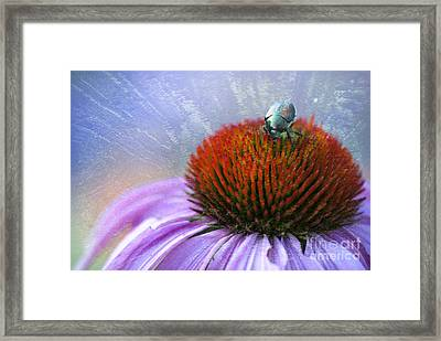 Beetlemania Framed Print by Juli Scalzi