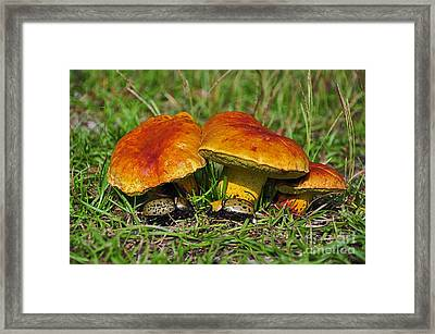 Beetles Beneath Boletus Framed Print by Al Powell Photography USA