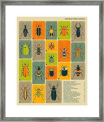 Beetles Of North America Framed Print by Jazzberry Blue
