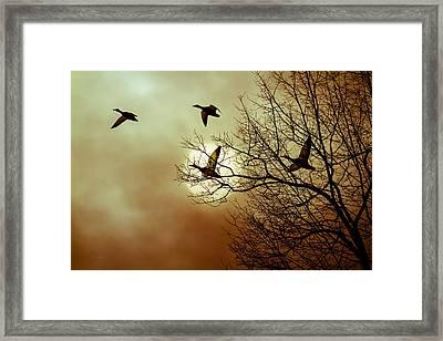 Before A Winter Sky Framed Print by Bob Orsillo