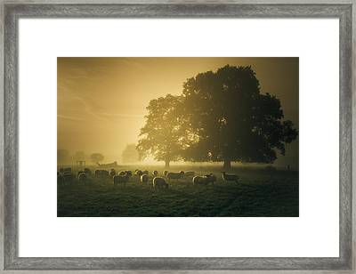 Before Dawn Gathering Framed Print by Chris Fletcher
